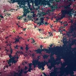 画像素材512✕512|花|364