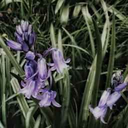 画像素材512✕512|花|368