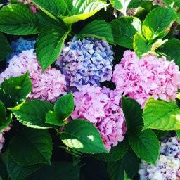 画像素材512✕512|花|377