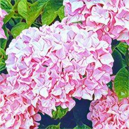 画像素材512✕512|花|395