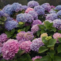 Stock images—Square: 512×512 │ Flowers │ 401