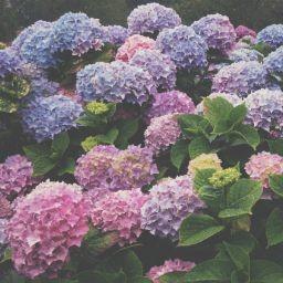 画像素材512✕512|花|403