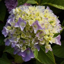 Stock images—Square: 512×512 │ Flowers │ 405