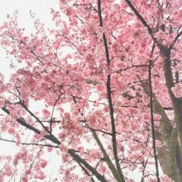 画像素材512✕512|花|414