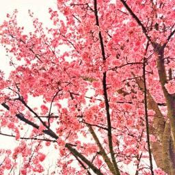 画像素材512✕512|花|415