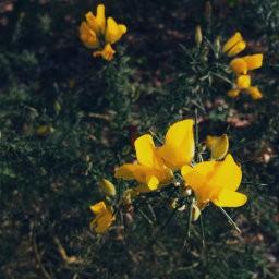 画像素材512✕512|花|423