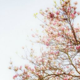 Stock images—Square: 512×512 │ Flowers │ 455