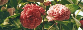 Flowers: 391