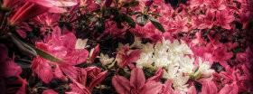 画像素材|Facebookカバー写真|花の写真|423