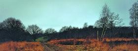 Trees │ 207