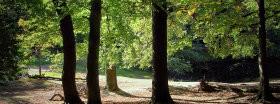 Trees: 208