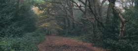 Trees │ 224