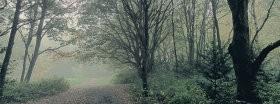 Trees │ 227