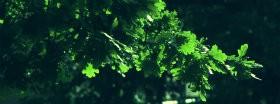 Trees │ 181