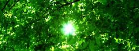 Trees │ 184
