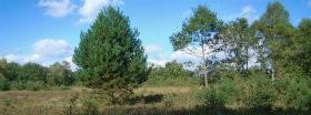 Trees │ 187