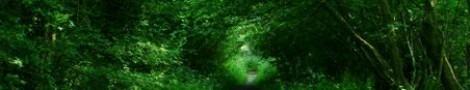 Trees │ 11