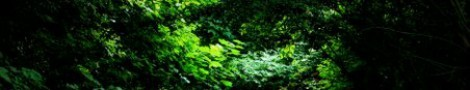 Trees │ 2