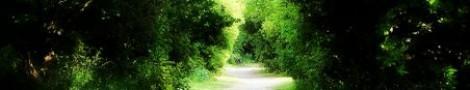 Trees │ 3