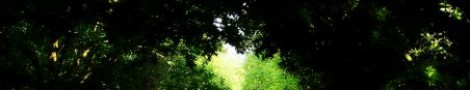 Trees │ 4