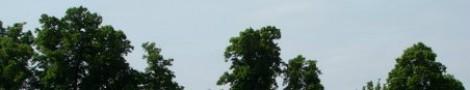 Trees │ 5