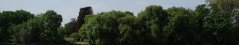 Trees │ 6