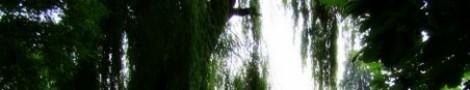 Trees │ 7