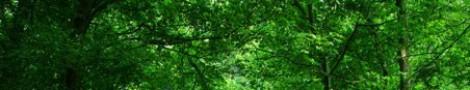 Trees │ 9