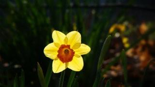 Thumbnail: flowers—132