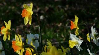 Thumbnail: flowers—133