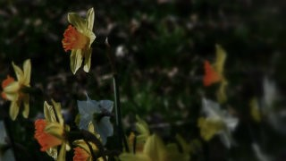 Thumbnail: flowers—134