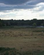 (Thumbnail) Deer in Richmond Park, 12 September 2015