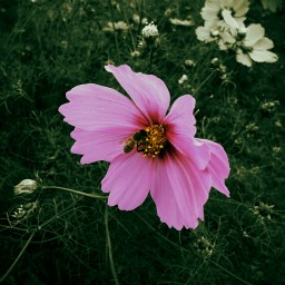 Thumbnail — Stock images 512 × 512: flowers — 244